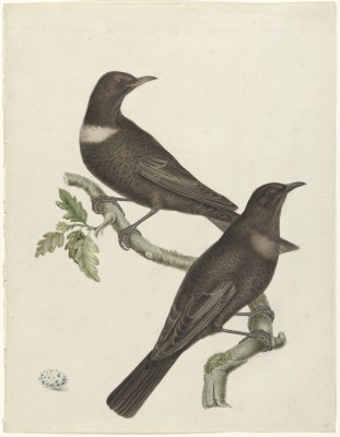 Ptaki - wf194