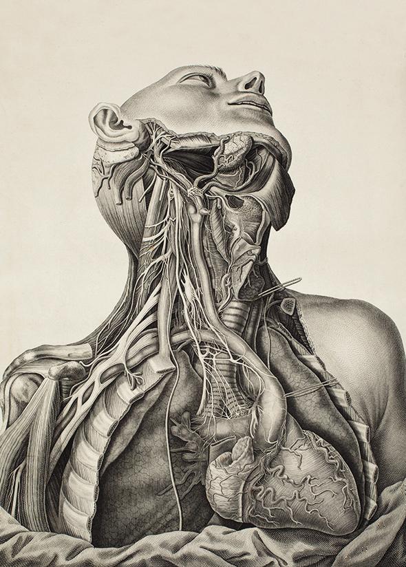 Anatomia Człowieka - wf206