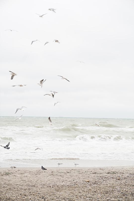 Morze  - wf1587