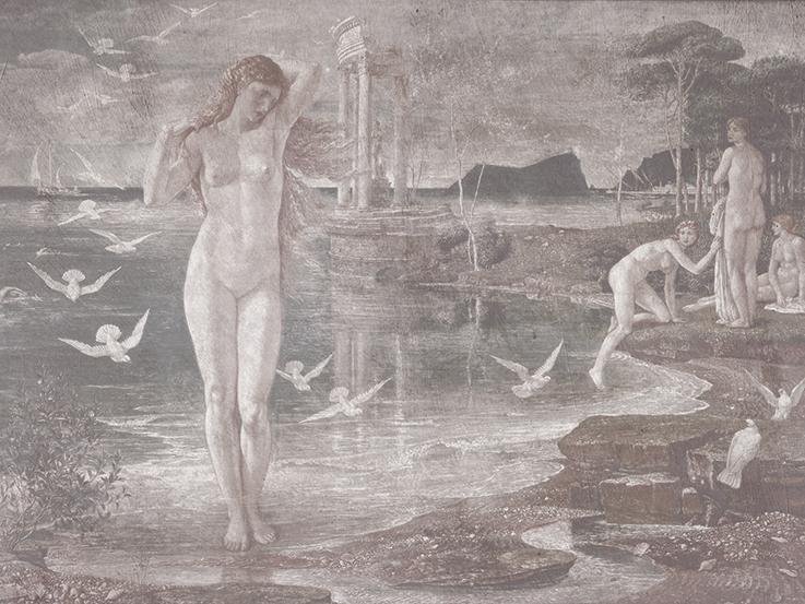 Venus - wf1769