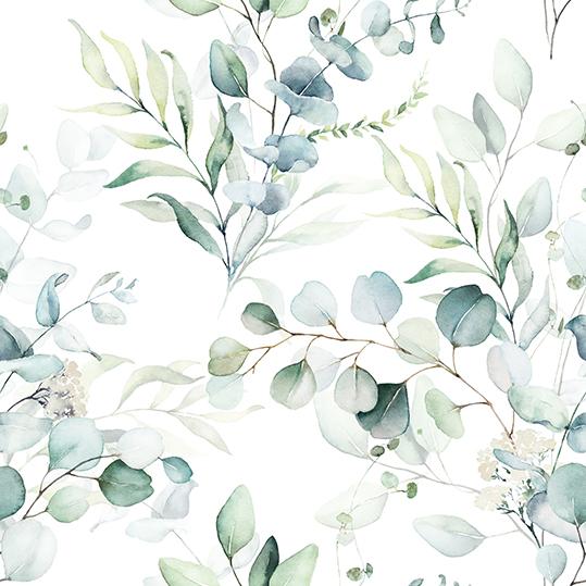 Eukaliptus - wf1881
