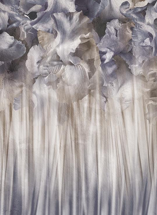 Irises - wf1879