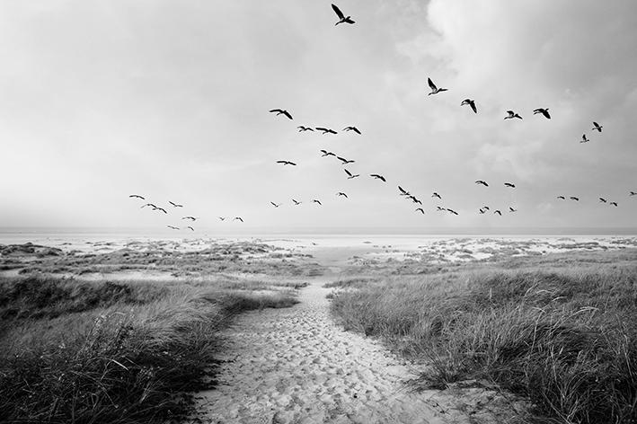 Morze  - wf1397