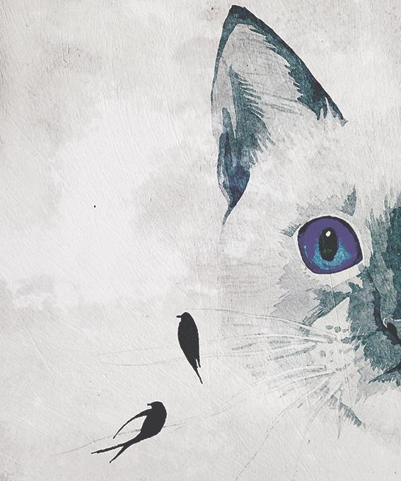 Kot - wf1765