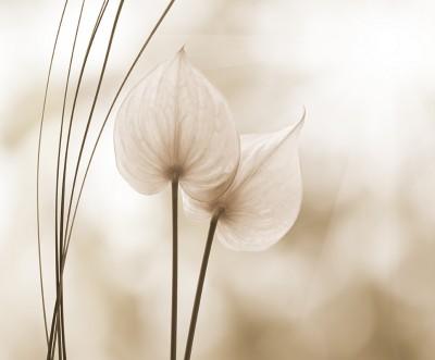 fototapeta-w-kwiaty - wf104