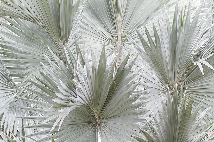 Ogród Palmowy  - wf1840