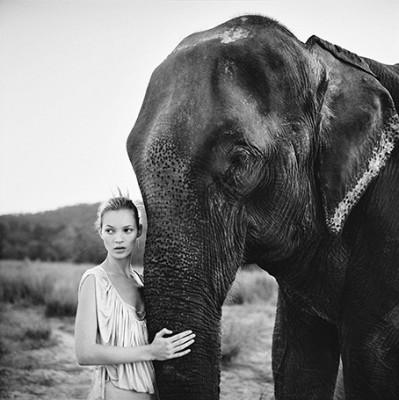 Kate Moss - wf1413