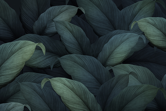 Tropical Leaves - wf1672