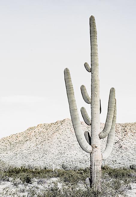 Arizona - wf1632