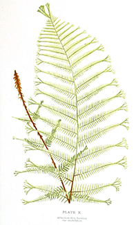 Plakat botaniczny 1 - wf98