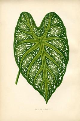 Plakat Botanika 2 - wf99