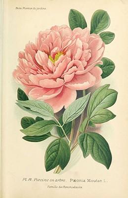 Plakat Botaniczny  - wf102