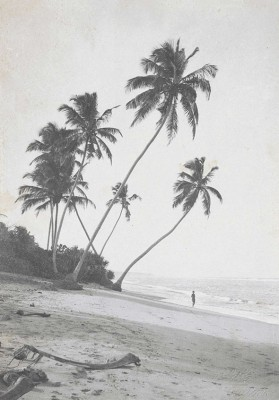 Plaża - wf846