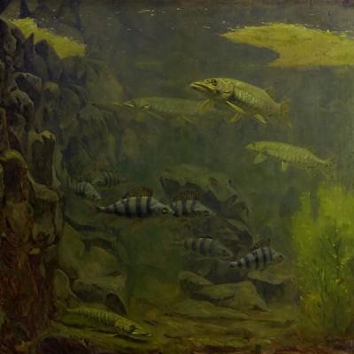 Szczupak i okoń w akwarium, Gerrit Willem Dijsselhof, 1910 - 1920r. - wf981
