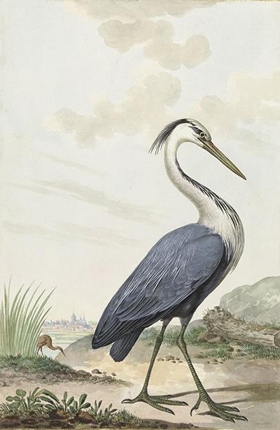 Czapla Modra, JABES HEENCK, 1776r.  - wf201