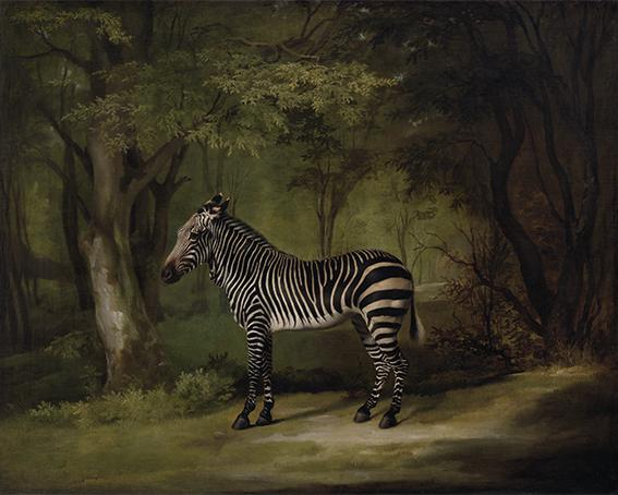 Zebra, George Stubbs, 1763 - wf1326